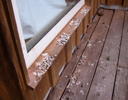 guano on bottom window ledge