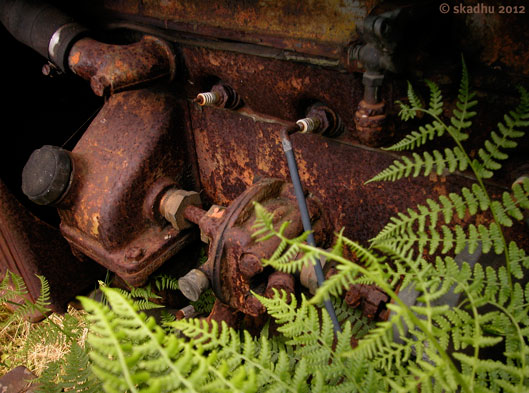 old rusty engine, overgrown by ferns