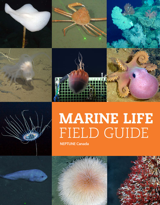 cover of Marine Life Field Guide