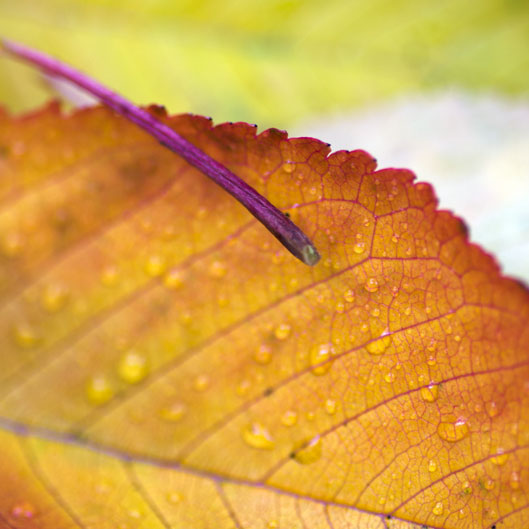 closeup of autumn leaves